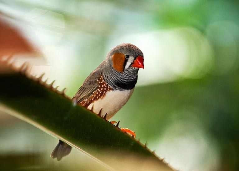 A bird sits on a branch at Jungleland