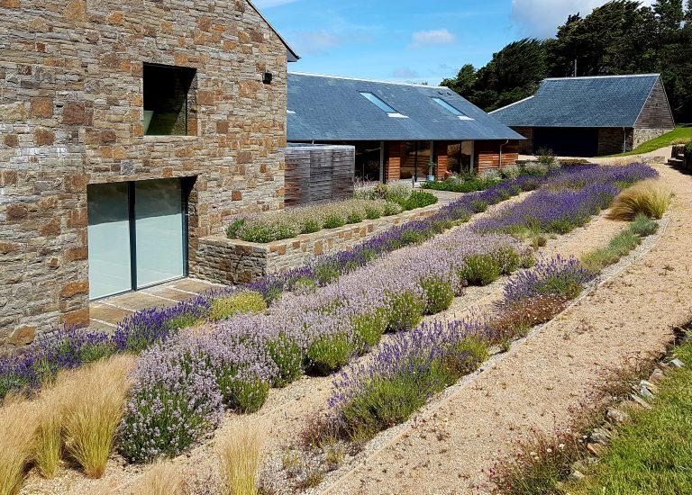 https://stjohnsgardencentre.co.uk/wp-content/uploads/2016/09/Landscape-lavender3_768x550_acf_cropped.jpg