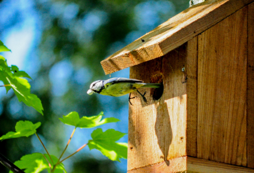 nest box]