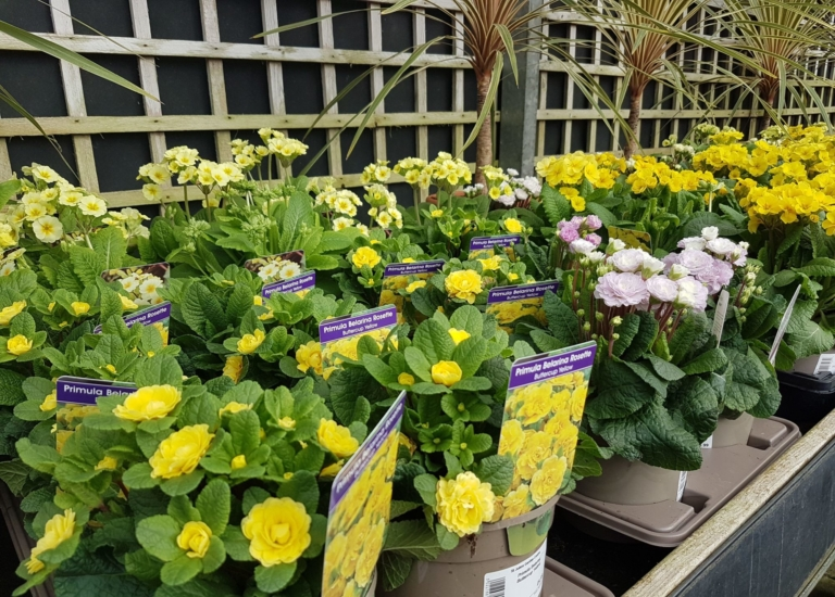 https://stjohnsgardencentre.co.uk/wp-content/uploads/2020/02/Spring-flowers-4_768x550_acf_cropped.jpeg