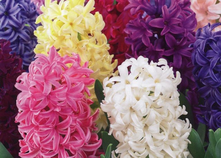 TP622 Mixed Colours - Garden