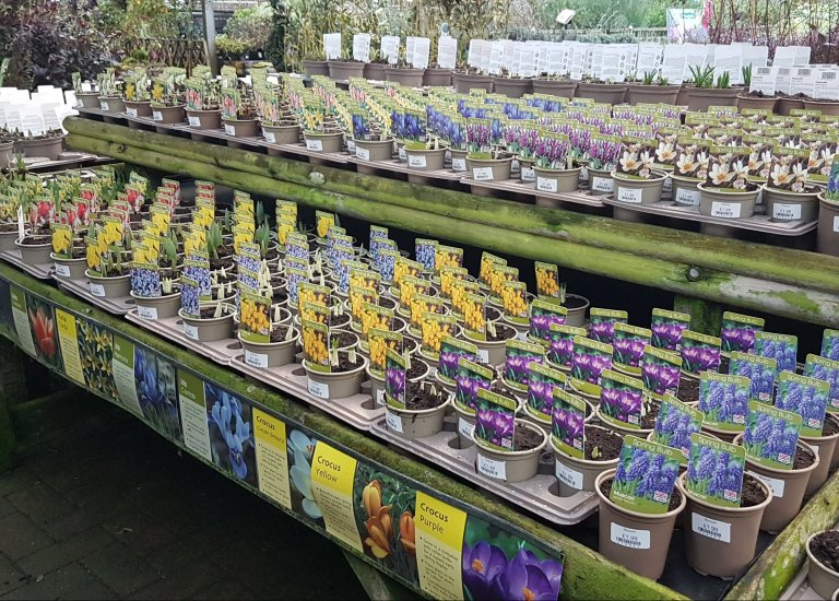 https://stjohnsgardencentre.co.uk/wp-content/uploads/2021/01/Spring-Bulbs_768x550_acf_cropped.jpg