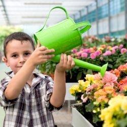 The Junior Gardener