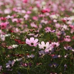 Flower, Vegetable & Herb Seeds