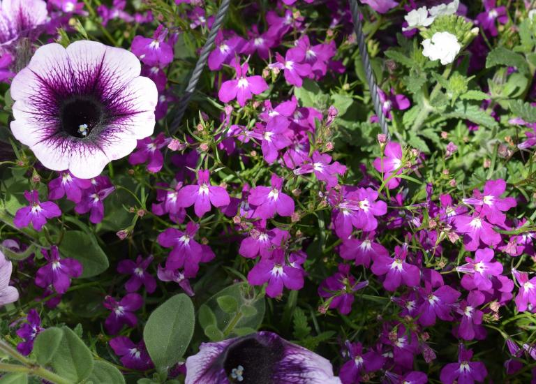 purple-3416759_1920