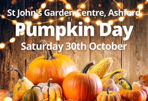 Fb Pumpkin Day 2021